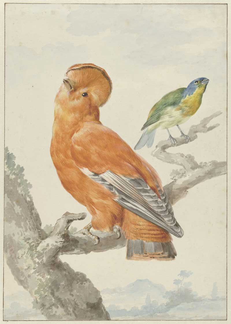 Two-exotic-birds